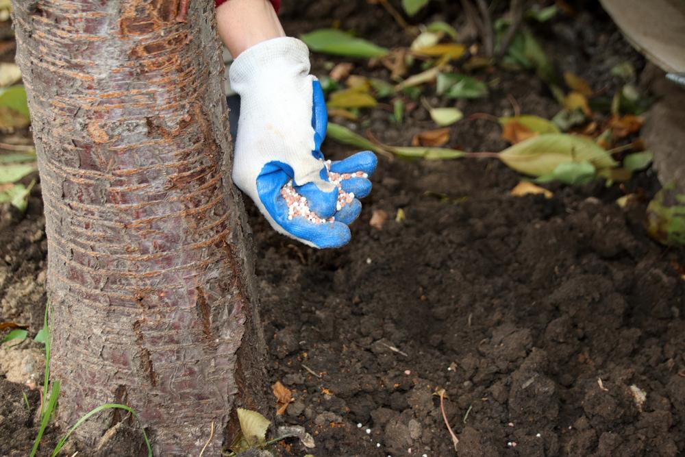 Почему навоз рекомендуют вносить при осенней обработке почвы а минеральные 86